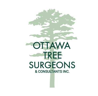Ottawa Arborist - Tree Care Services in Ontario - Ottawa Tree Surgeons & Consultants Inc
